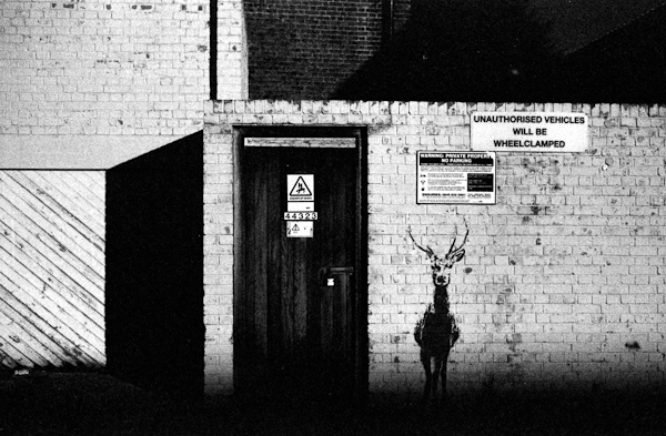photo: deer stencil on wall